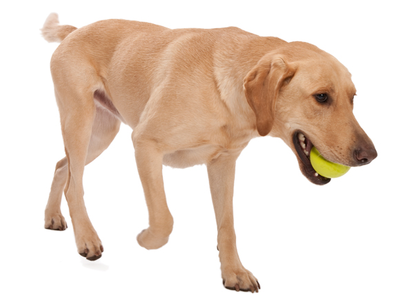 Zogoflex Jive Ball